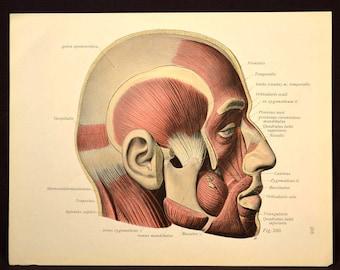 Human Head Wall Decor Human Anatomy Wall Art Print Medical