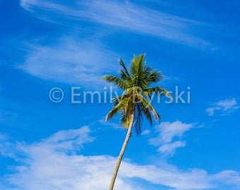 Palm Tree Sunny Blue Sky Photography Print - Various Sizes