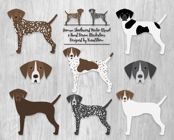 German Shorthaired Pointer Clipart Digital Hunting Dogs