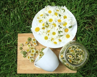 Hops herbal tea - Soleil d'été - hops, daisy, dewberry leaves