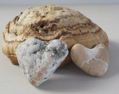 Natural Heart Shaped Rocks • Pair of Heart Stones • Black and White Brown White Hearts