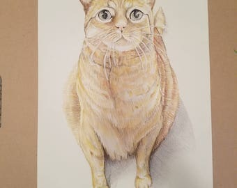 Custom Pet Portrait (Colored Pencil) - 1 Pet Only