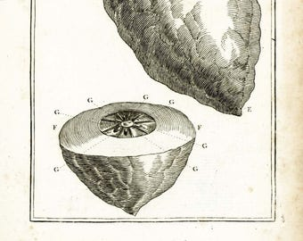 1797 Antique Lemon Print Tropical Fruit Botanical Natural History Wall Home Decor