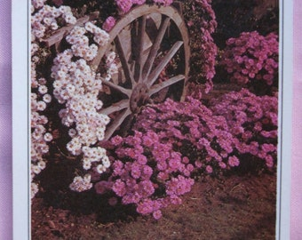 Vintage card. Postcard.Uruguay.To frame.Spanish quote.Paz.Pink flowers. Garden.Old weel.Grass.Gift.Birthday gift.Scrapbook.Spring.Summer.