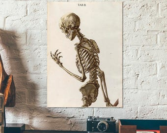 Posing skeleton from old book on human anatomy, 1767 - Anatomy poster - Medical poster - Skeleton poster - Human body poster