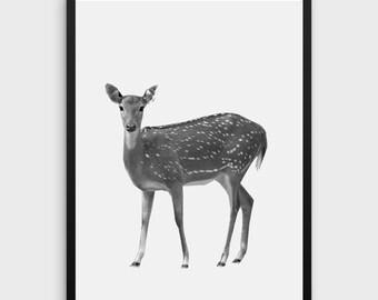 Black and White Deer Print | Instant Download, Deer Photo Print, Deer Printable, Animal Print, Deer Wall Art Decor, Deer Art, Printable Art