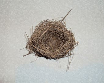 Real Bird Nest - Small