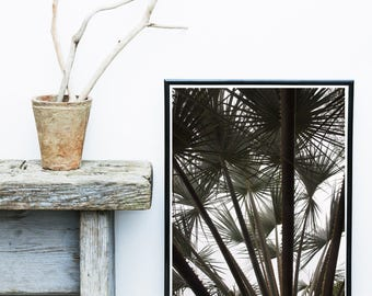 Palm Tree Print, Tropical Art Print, Palm Leaves, Black And White Photo, Home Decor, Coastal Art, Wall Decor, Wall Print, Poster