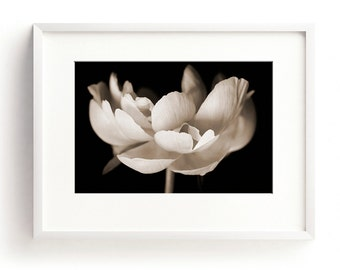 Peony Print, Flower Wall Art, Large Floral Wall Art, Black and White, Fine Art Photograph, Nature Print, Botanical Print, Botanical Wall Art