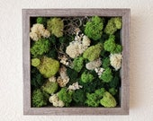 Framed Vertical Moss Wall Garden with Reindeer Moss, Spanish Moss and Lichen - 2 sizes and 5 frame color options