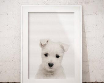 Schnauzer print, White Schnauzer Gift, Pet Printable Art, Dog Photography, Nursery Decor, Dog Wall Art Decor, Nursery Animals, Puppy print