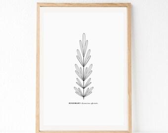 Herb Art, Rosemary Art Print, Minimal Kitchen Art, Kitchen Art Print, Minimalist Art Print, Line Art, Modern Wall Art, Simple Kitchen Art