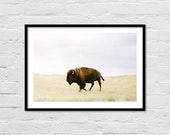 Buffalo Print, Bison Print, Printable Wall Art, Animal Prints, Southwestern Decor, Animal Art, Buffalo Photography, Bison Photo, Download