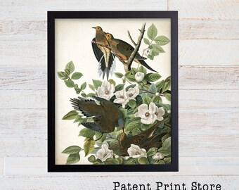 James Audubon Carolina Pigeon Art Print. Bird Print. Audubon Prints. Bedroom Art. Bird Artwork. Bird Print. Bird Art Print. Audubon Bird Art