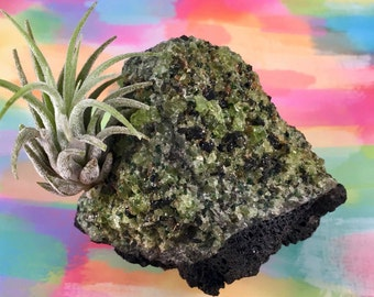 Natural, Green Olivine & Volcanic Rock Air Plant Garden