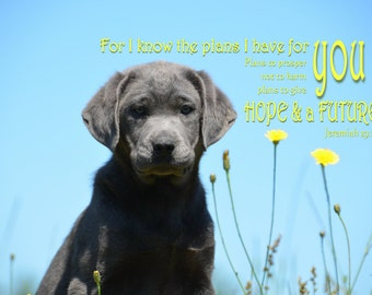 Inspirational Labrador photo image instant download