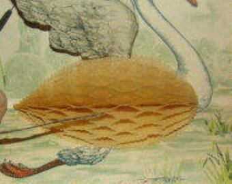 SALE Wonderful Vintage Honeycomb Swan Postcard