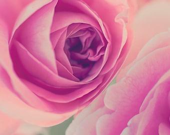 Rose floral print nature photography flower nursery botanical garden wall art decor fine art pink
