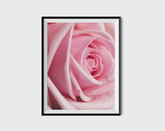 Pink rose art print, mother's day wall art, pink rose photography, pink rose wall art, botanical wall art, mother's day rose art print