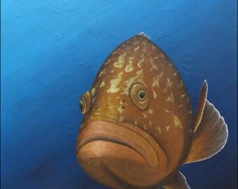 Sea grouper