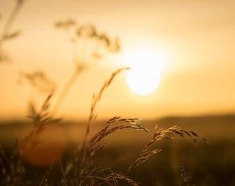 Wheat field Sunrise in Cambridge