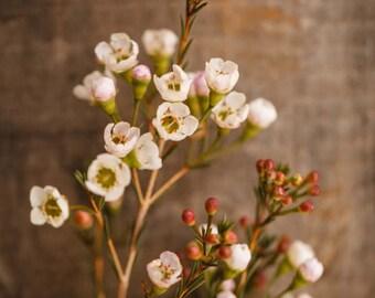 Fine Art Print, Wildflowers, Flower Art, Pink, Home Decor, Botanical Print, Floral Photography, Still Life Art, Blooms, Petals, Bouquet