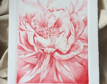 Fine Art Drypoint Etching Print - Peony - in Scarlet