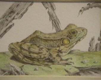 "Frog art graphite pencil drawing green ""Froggy"" watercolor nature lily pad Shadow Box original Art assemblage mixed media m3 nature treasure"