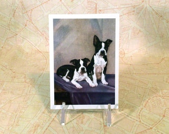 Boston Terrier Magnet - Puppies Sit For Portrait - Puppy Dogs