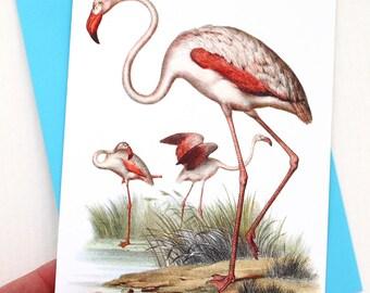 Flamingo 5x7 Card / Beach Wall Decor - Frameable Greeting Card Makes a Lovely Gift