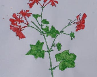 Watercolor painting of Geraniums