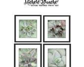 Sedum Photo Set, Sedum Photography, Mint Green Photos, Nature Print set, Sedum Art, Mint Green Square Photo Art Print Set, Botanical Prints