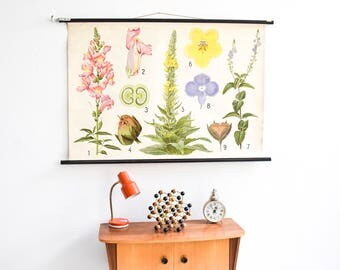 Antique floral poster, botanical, pull down chart, flower print, educational print flowers Ref: 471