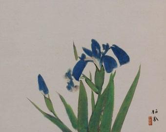 Japanese Fine Art Wall Hanging Scroll Painting Iris kakejiku – 1611047