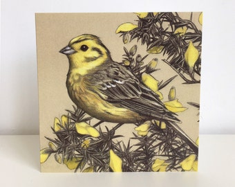 Pack of 6 'Yellowhammer on a Gorse Bush' Greeting Cards