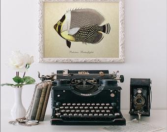 Botanical Print, Tropical Fish Print, Pakistan Butterfly Fish, Vintage Natural History Art, Fish Art, Butterfly Fish Reproduction SL009