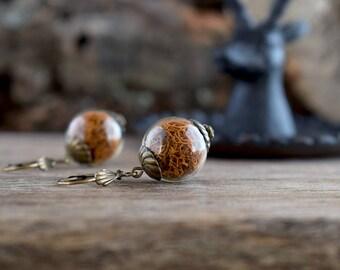 Terrarium earrings, Real moss earrings, Ochre earrings, Glass ball earrings, Reindeer moss jewelry, True nature jewelry, Woodland earrings