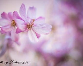 Nature Photography.Pink Weeping Cherry Tree Blossoms.Pink Spring Flowering Tree.Pink Pastel Colors.Dreamy Floral Print.Fine Art Photography.