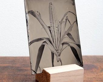 Corn Tintype