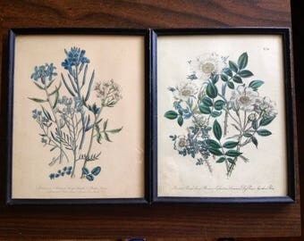 Pair of Wildflower Lithographs - Framed, Vintage, Flowers, Plants, Nature, Art, Wall Hanging, Elegant, Wild Flower, Set, Two, Couple.