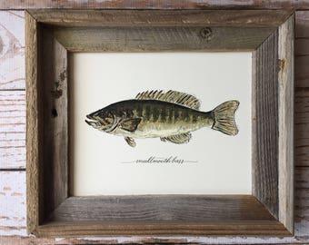 FRAMED Smallmouth Bass Art Print, 8x10, 11x14