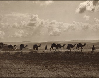 16x24 Poster; Camel Transport Egypt Passing Over Olivet, 1918