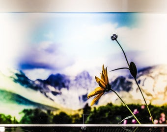 """Mural from acrylic glass motif """"Flower before the Alps"""""""
