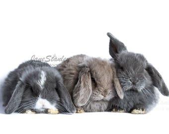 A4 print, Baby Animal Print, Baby Rabbits, Bunny Print, Nursery Print, Nursery Art, Kid's Room Print, Nursery Decor