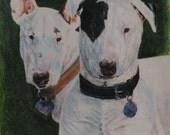 2 bull terriers portrait