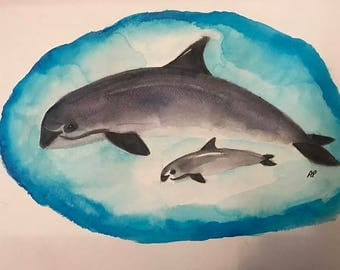 Vaquita Watercolor for Conservation National Marine Mammal Foundation