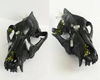 Coyote Skull With Quartz Crystals & Moss