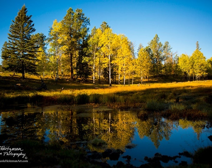 Fall Reflection Photography Black Hills scenery Metal Print Fall Scenery South Dakota Scenery Fall Trees Christmas Gift by Nicole Heitzman