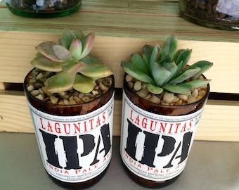 Lagunitas IPA 12 oz Glass Bottle Succulent & Cactus Planter
