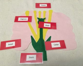 Parts of a Flower Montessori Nature Work Science Classroom Activity